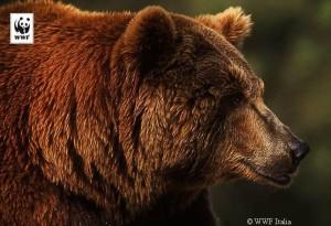 foto-orsa
